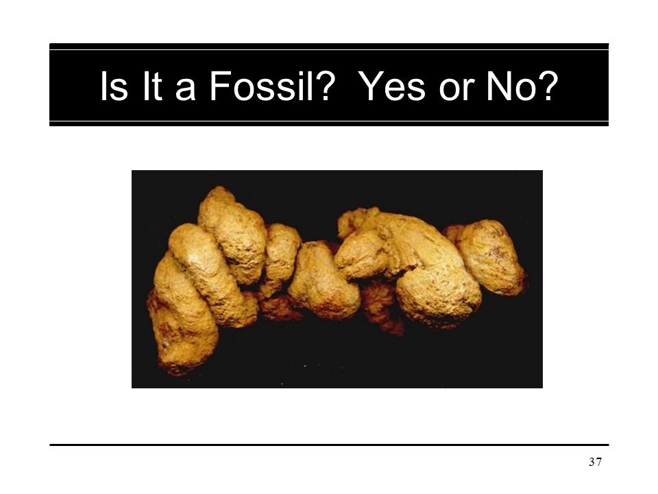 Is It a Fossil Yes or No Coprolite – fossilized feces. If students are uncertain, tell them what the image shows.