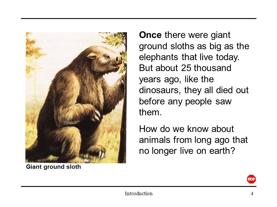Once there were giant ground sloths as big as the elephants that live today. But about 25 thousand years ago, like the dinosaurs, they all died out before any people saw them.