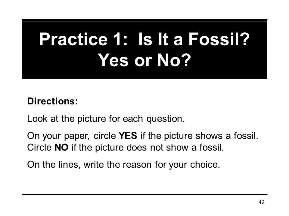 Practice 1: Is It a Fossil Yes or No
