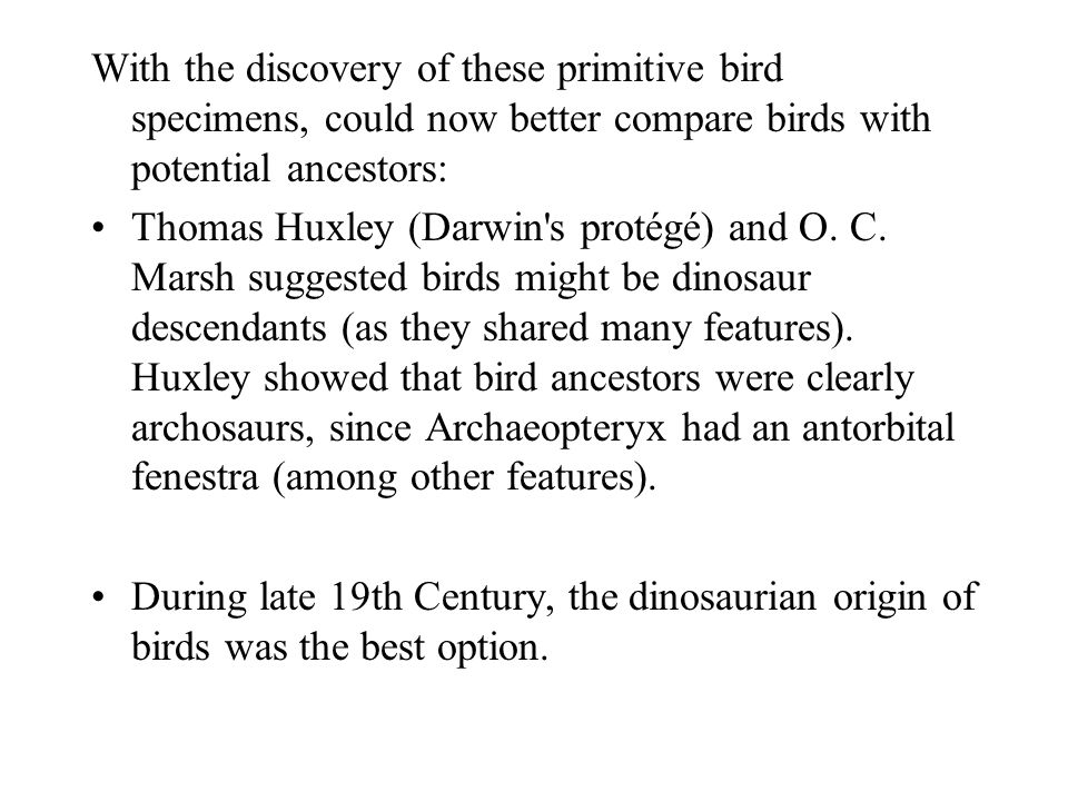 With the discovery of these primitive bird specimens, could now better compare birds with potential ancestors: