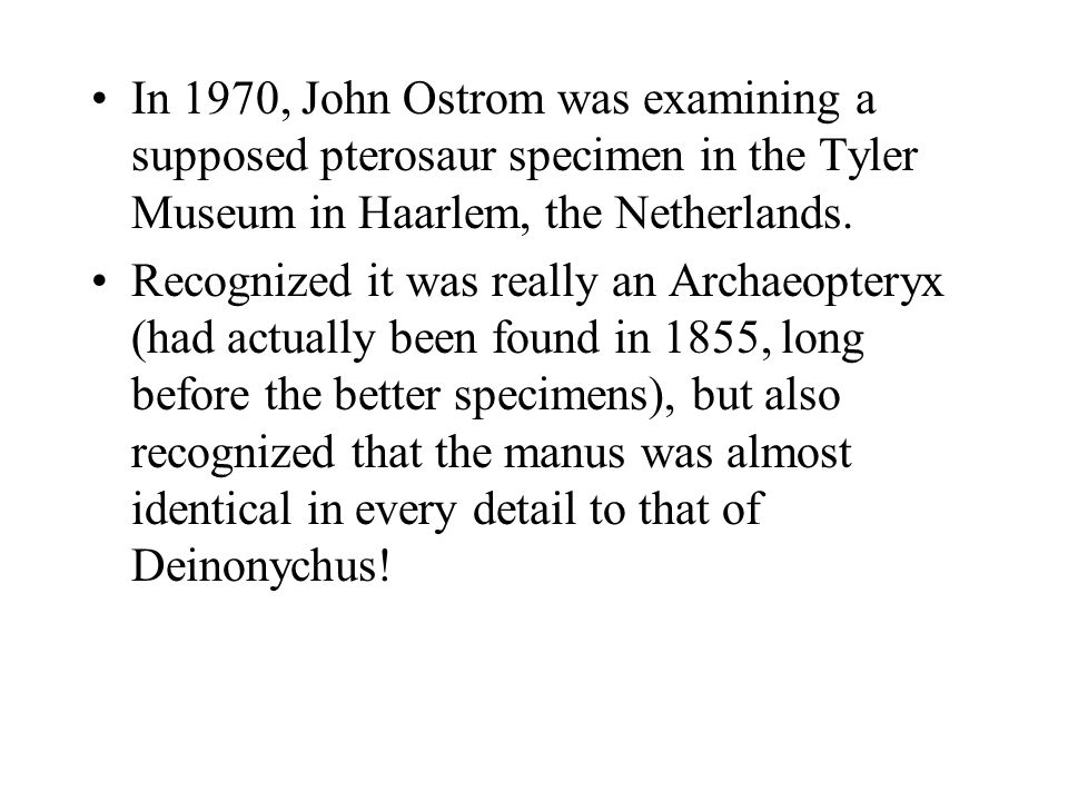 In 1970, John Ostrom was examining a supposed pterosaur specimen in the Tyler Museum in Haarlem, the Netherlands.