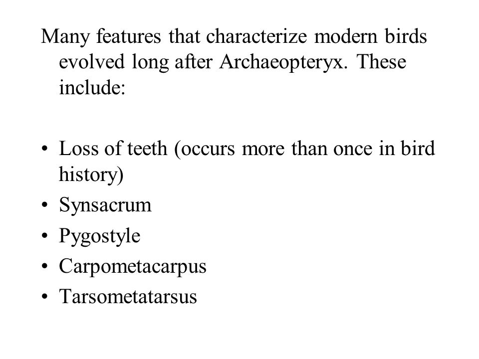 Many features that characterize modern birds evolved long after Archaeopteryx. These include:
