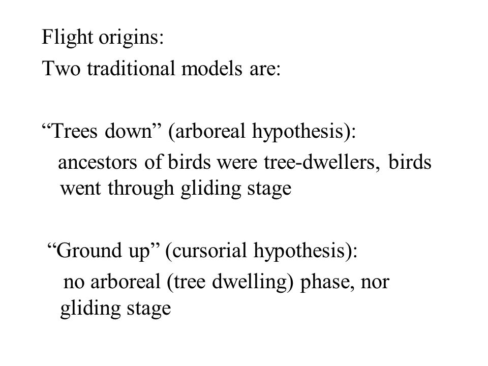Flight origins: Two traditional models are: Trees down (arboreal hypothesis):