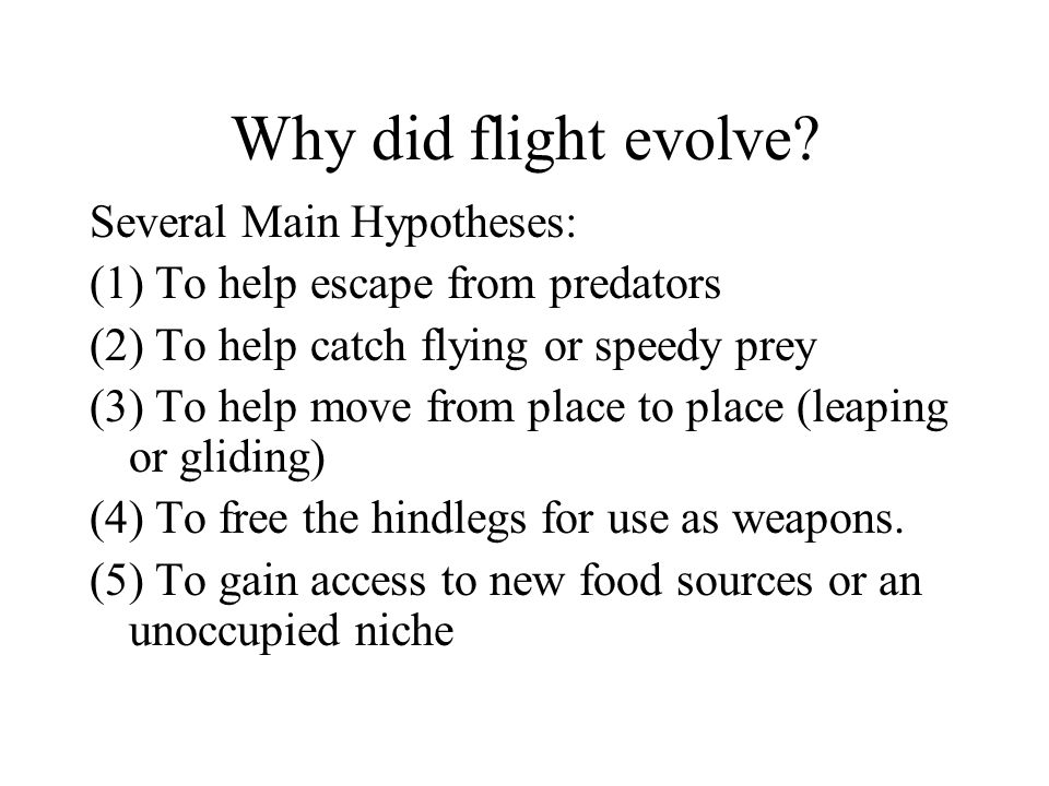Why did flight evolve Several Main Hypotheses: