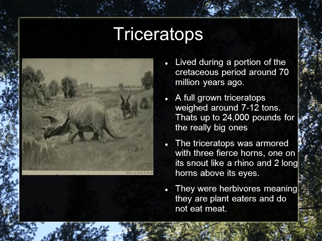 Triceratops Lived during a portion of the cretaceous period around 70 million years ago.