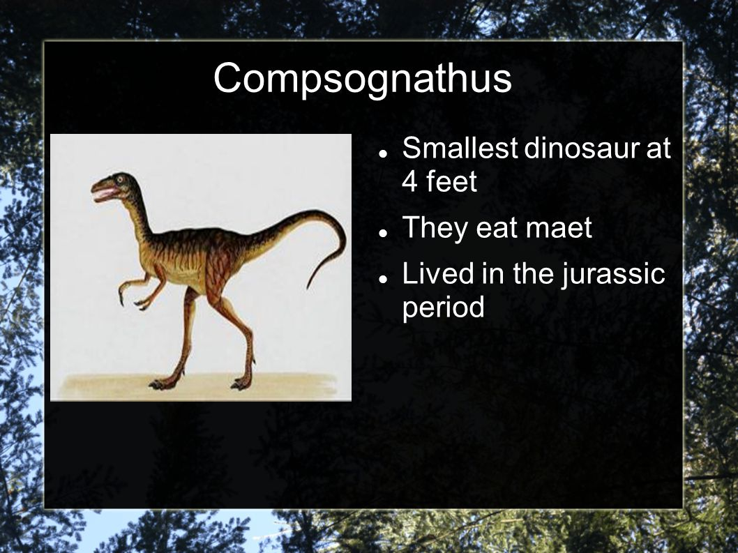 Compsognathus Smallest dinosaur at 4 feet They eat maet