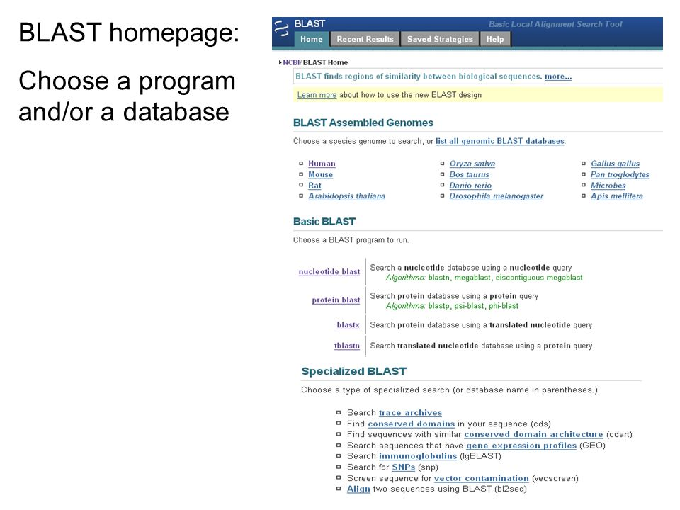 BLAST homepage: Choose a program and/or a database