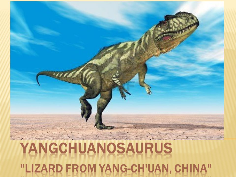 YANGCHUANOSAURUS Lizard from Yang-ch uan, China