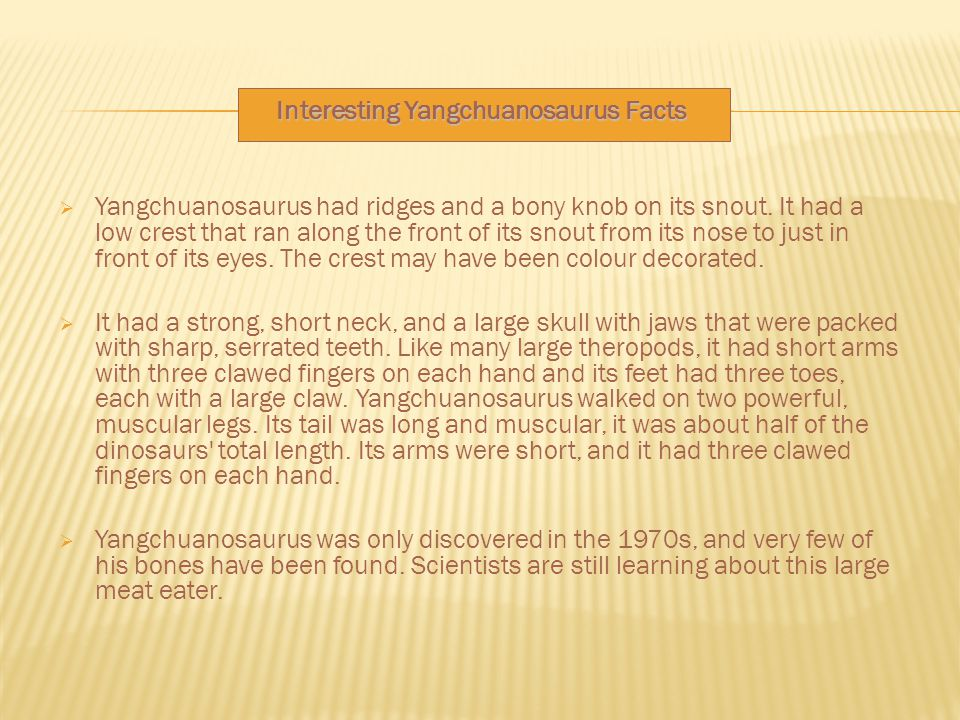 Interesting Yangchuanosaurus Facts