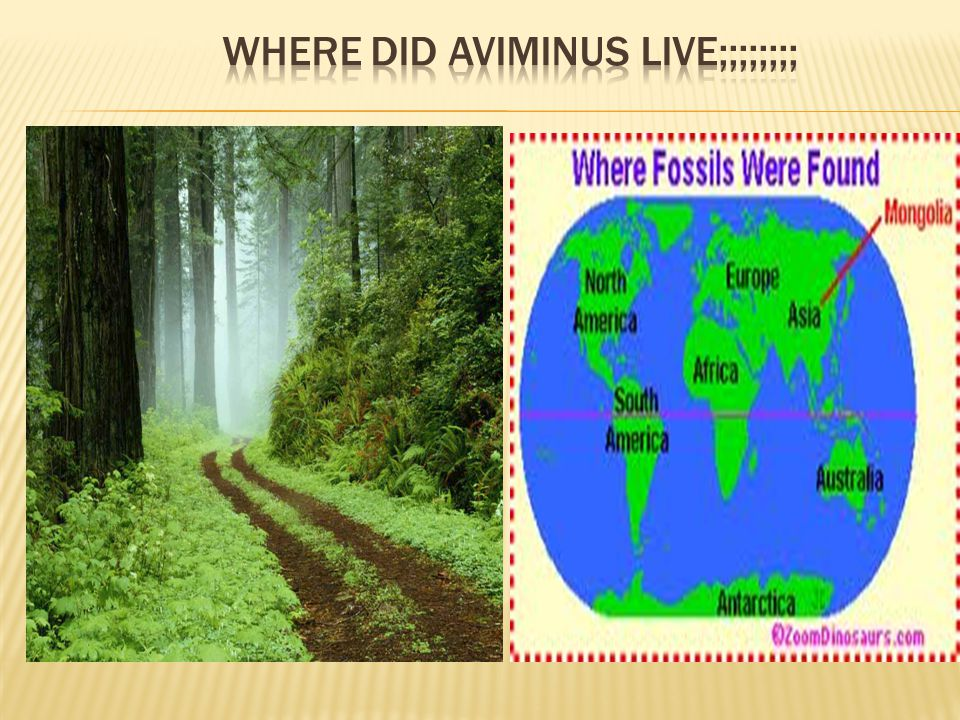 Where did aviminus live;;;;;;;;