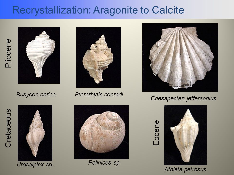 Recrystallization: Aragonite to Calcite