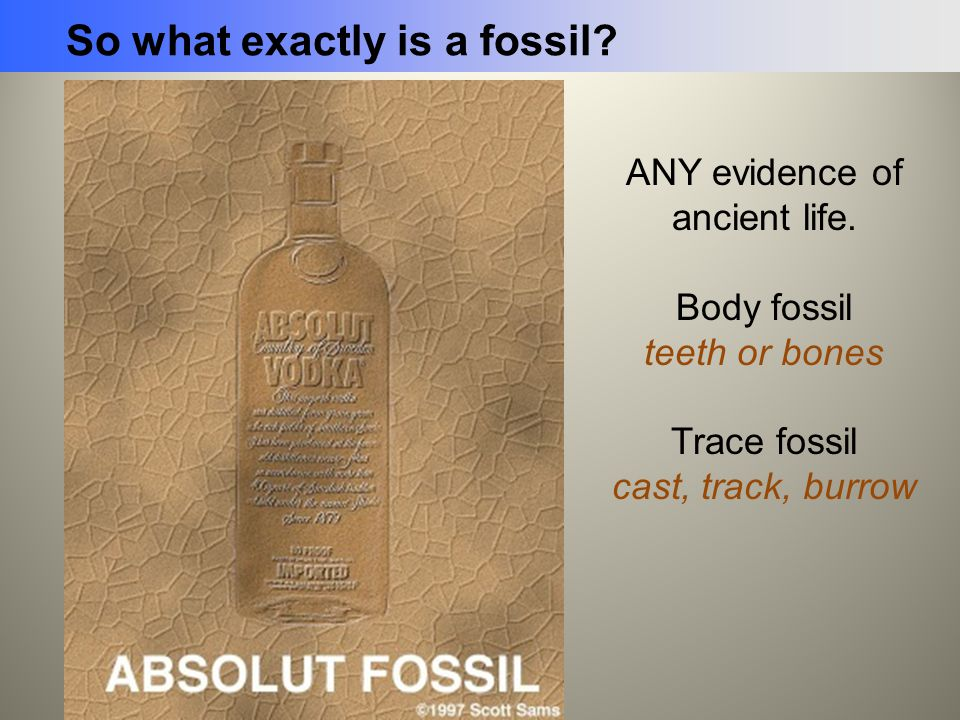ANY evidence of ancient life.