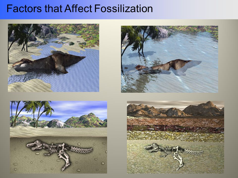 Factors that Affect Fossilization