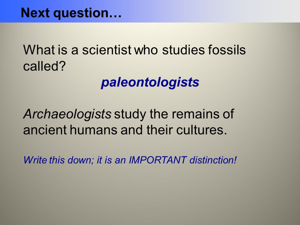 What is a scientist who studies fossils called paleontologists