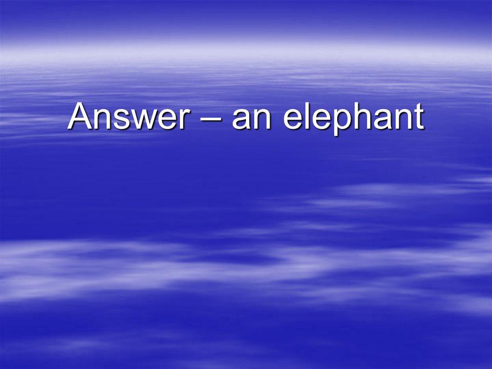 Answer – an elephant