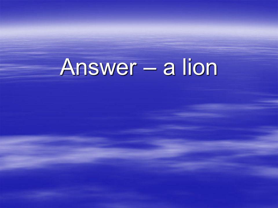 Answer – a lion