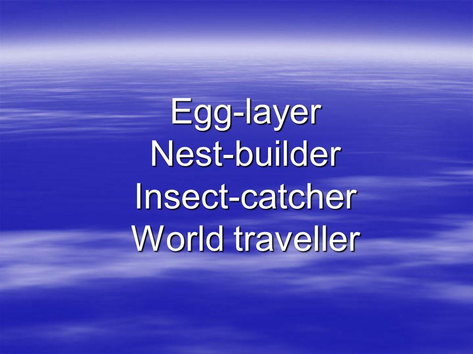 Egg-layer Nest-builder Insect-catcher World traveller