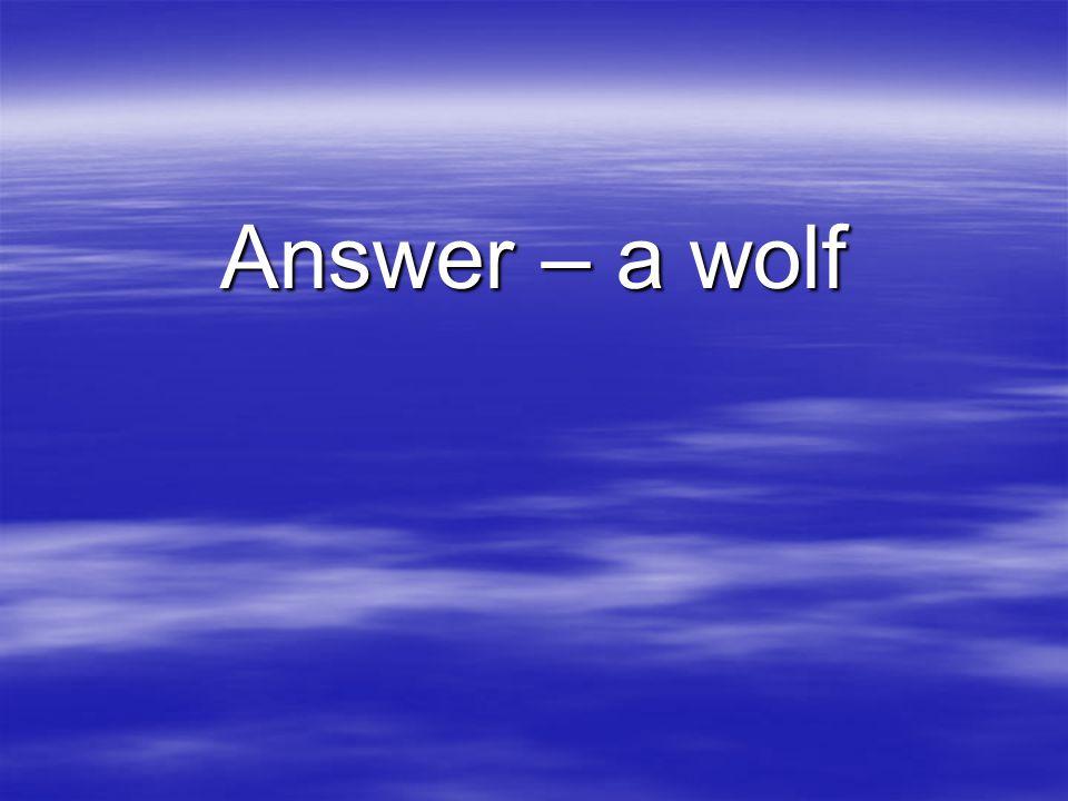 Answer – a wolf