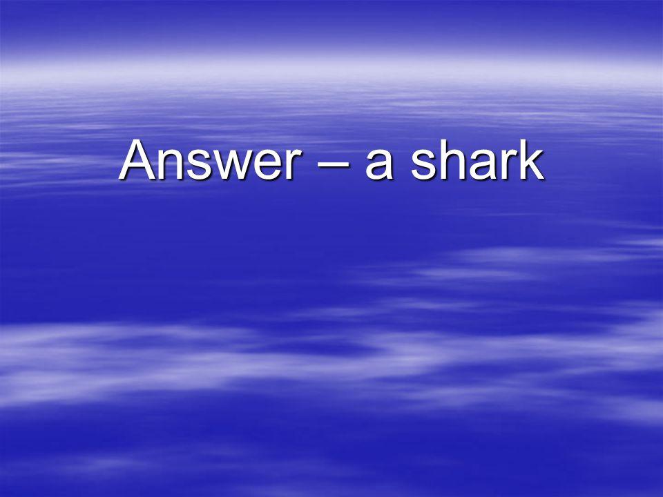 Answer – a shark
