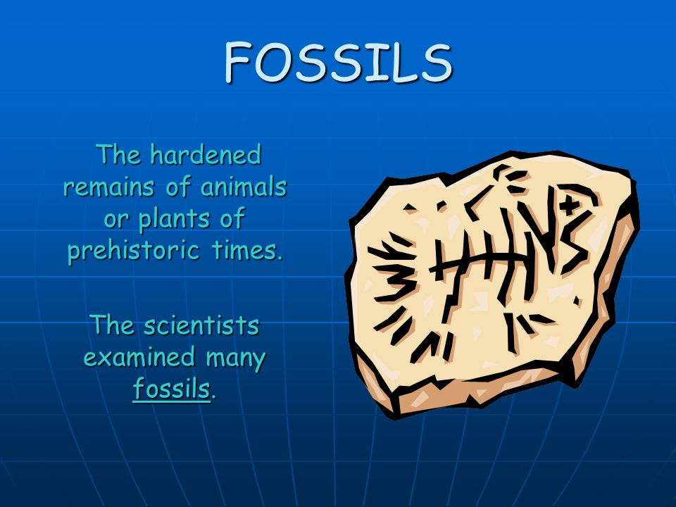 FOSSILS The hardened remains of animals or plants of prehistoric times.