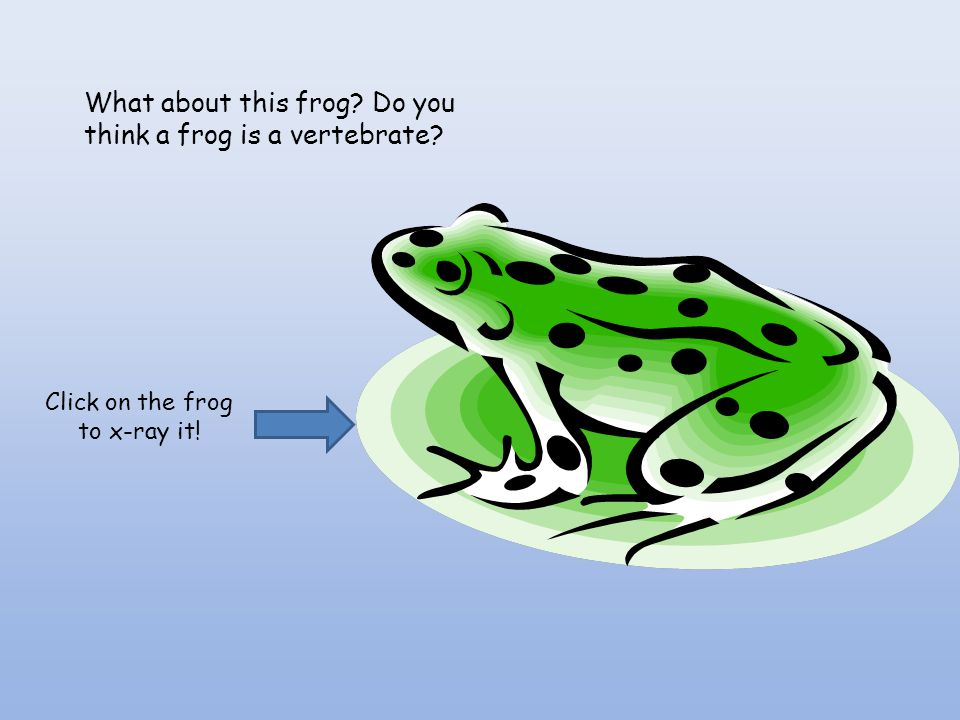 Click on the frog to x-ray it!