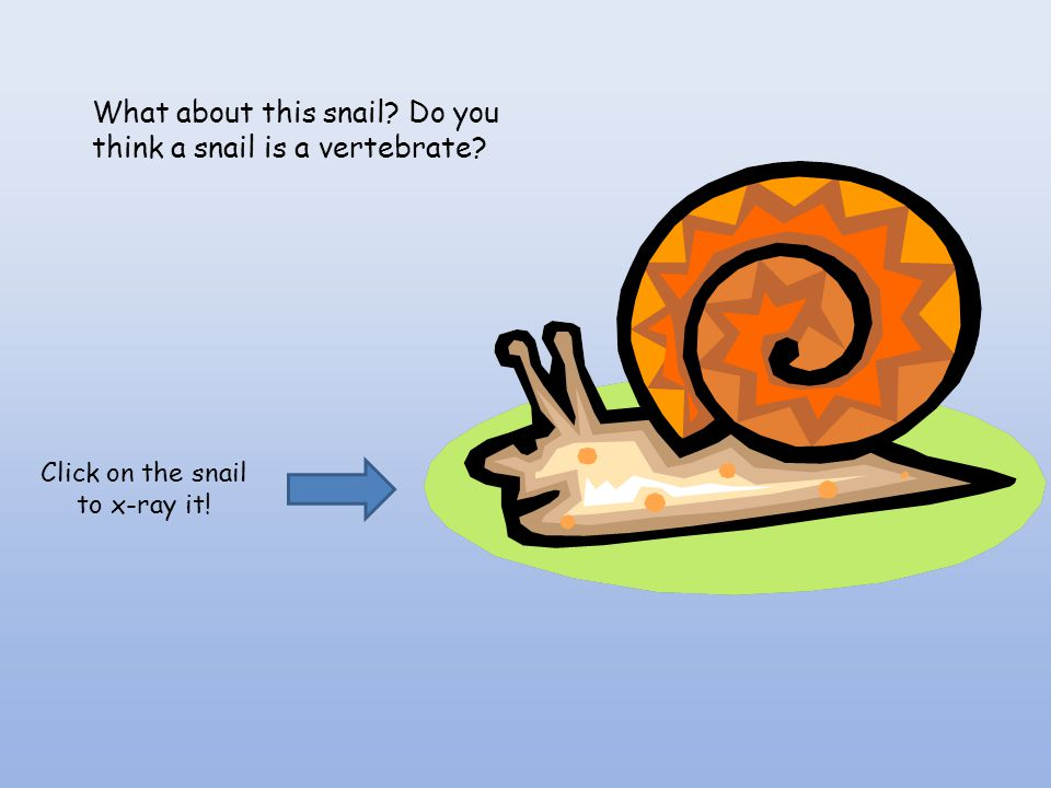 Click on the snail to x-ray it!
