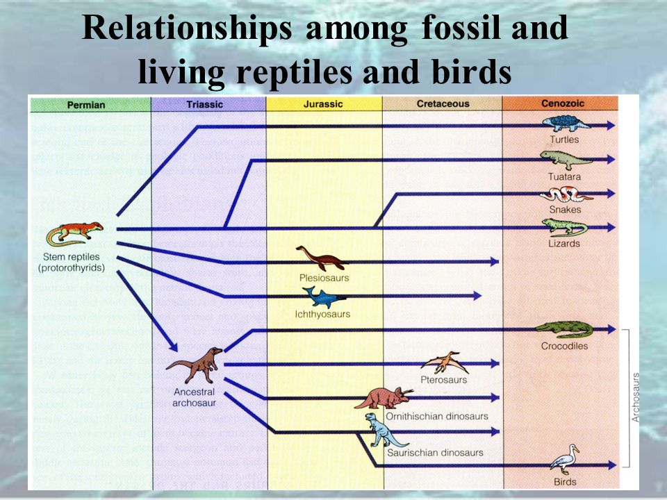 Relationships among fossil and living reptiles and birds