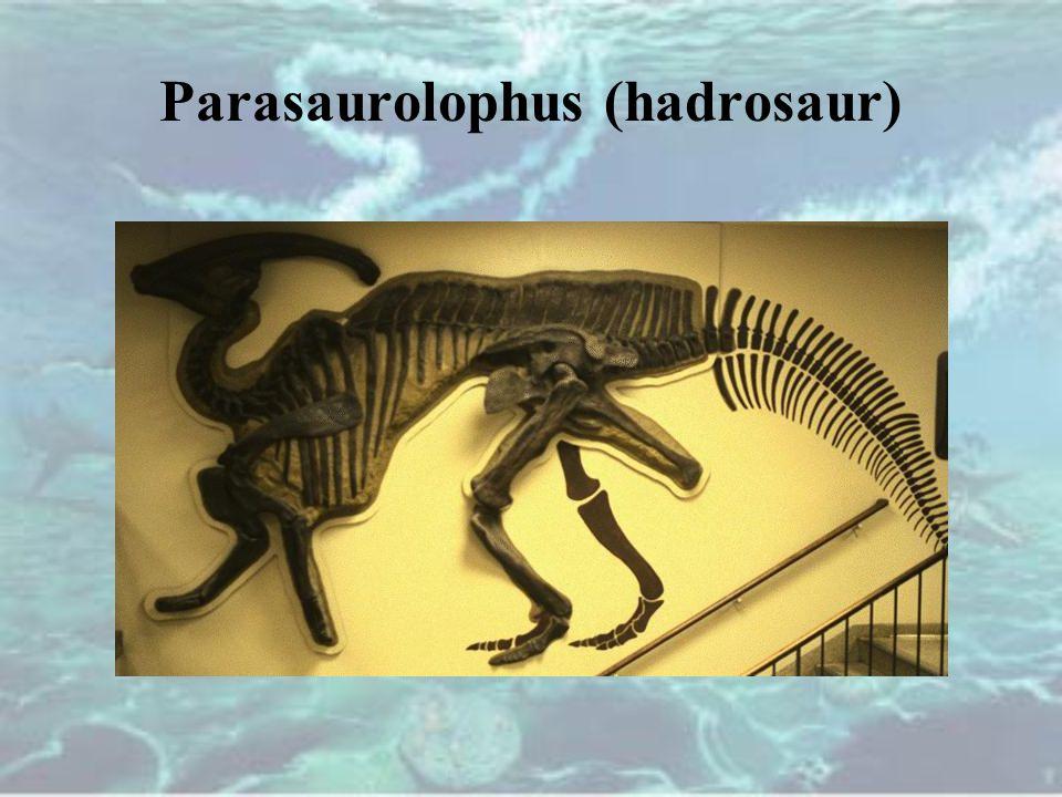 Parasaurolophus (hadrosaur)