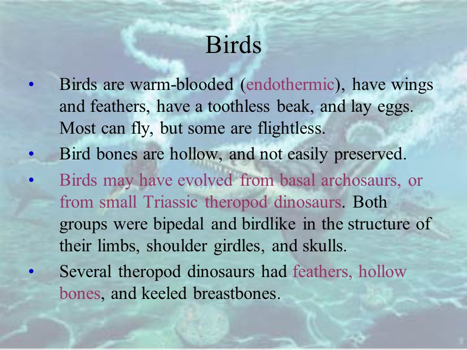 Birds Birds are warm-blooded (endothermic), have wings and feathers, have a toothless beak, and lay eggs. Most can fly, but some are flightless.