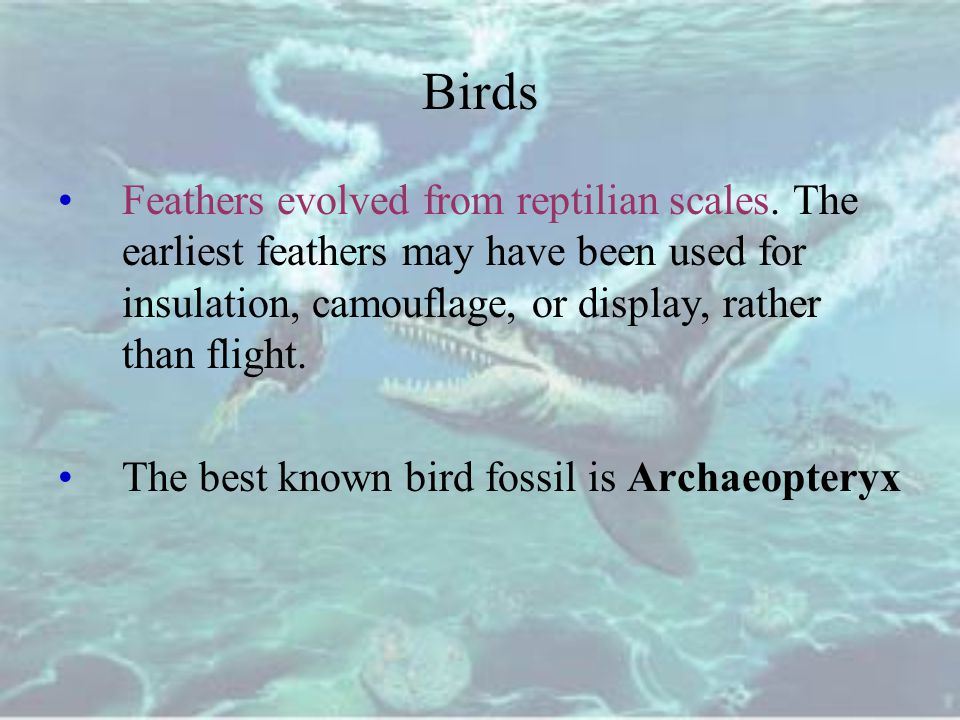 Birds Feathers evolved from reptilian scales. The earliest feathers may have been used for insulation, camouflage, or display, rather than flight.