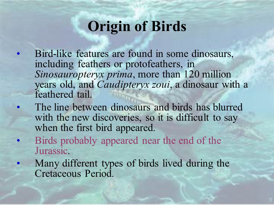 Origin of Birds