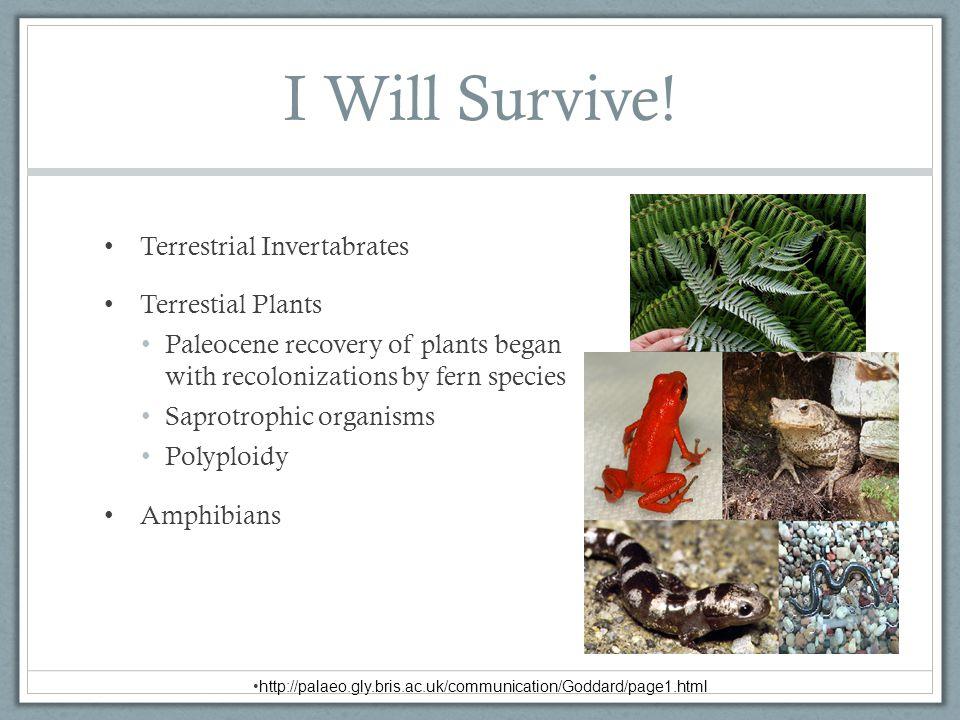 I Will Survive! Terrestrial Invertabrates Terrestial Plants