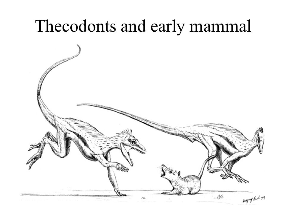 Thecodonts and early mammal