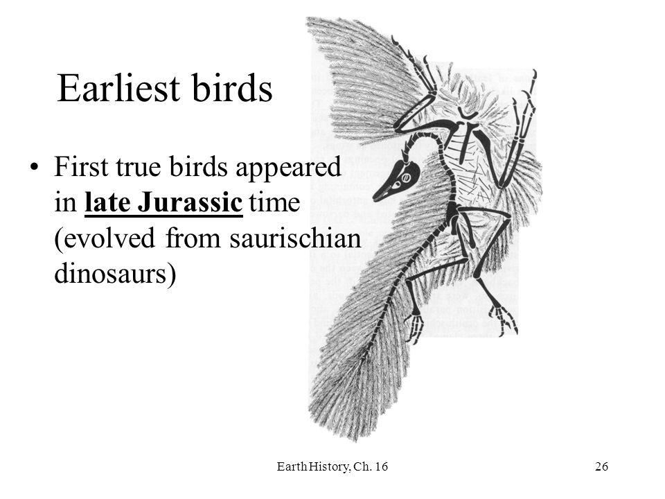 Earliest birds First true birds appeared in late Jurassic time (evolved from saurischian dinosaurs)