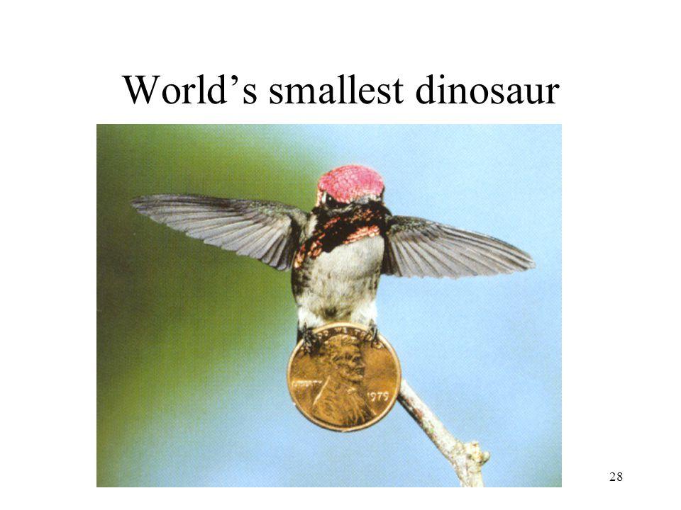 World's smallest dinosaur