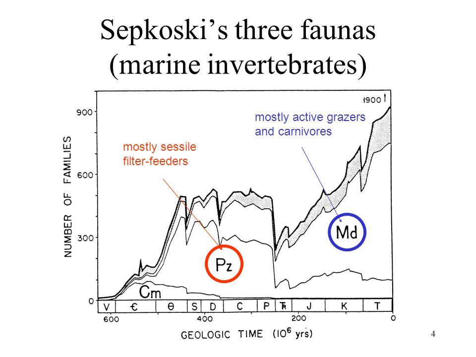 Sepkoski's three faunas (marine invertebrates)