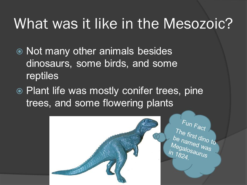 What was it like in the Mesozoic