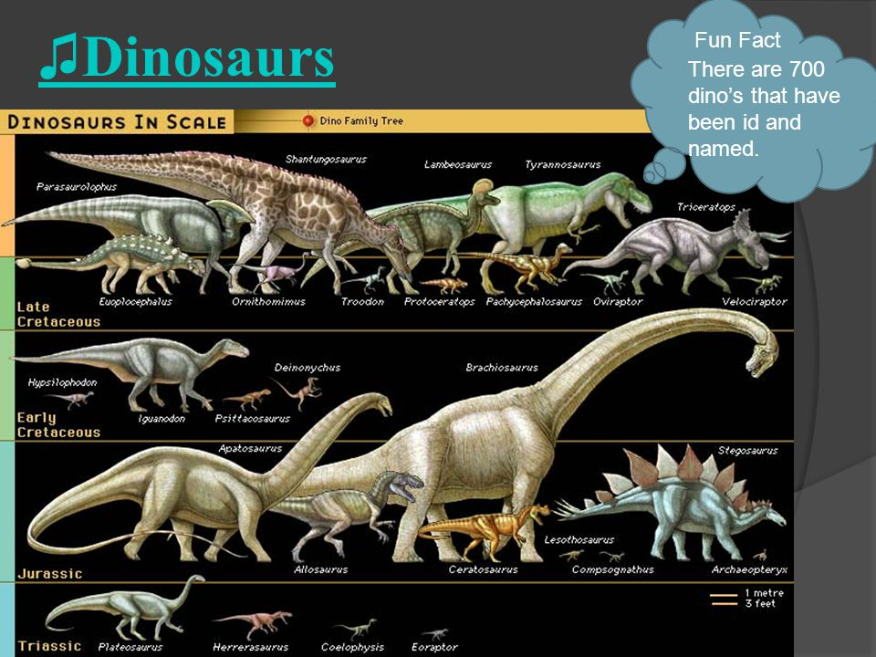 ♫Dinosaurs Fun Fact There are 700 dino's that have been id and named.