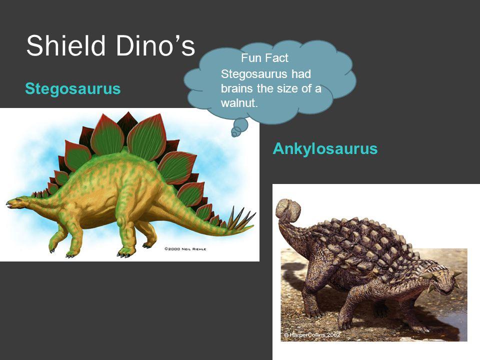 Shield Dino's Stegosaurus Ankylosaurus Fun Fact