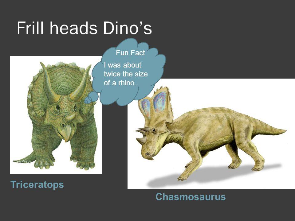 Frill heads Dino's Triceratops Chasmosaurus Fun Fact