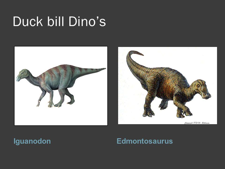 Duck bill Dino's Iguanodon Edmontosaurus