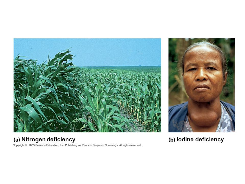 Nitrogen deficiency Iodine deficiency