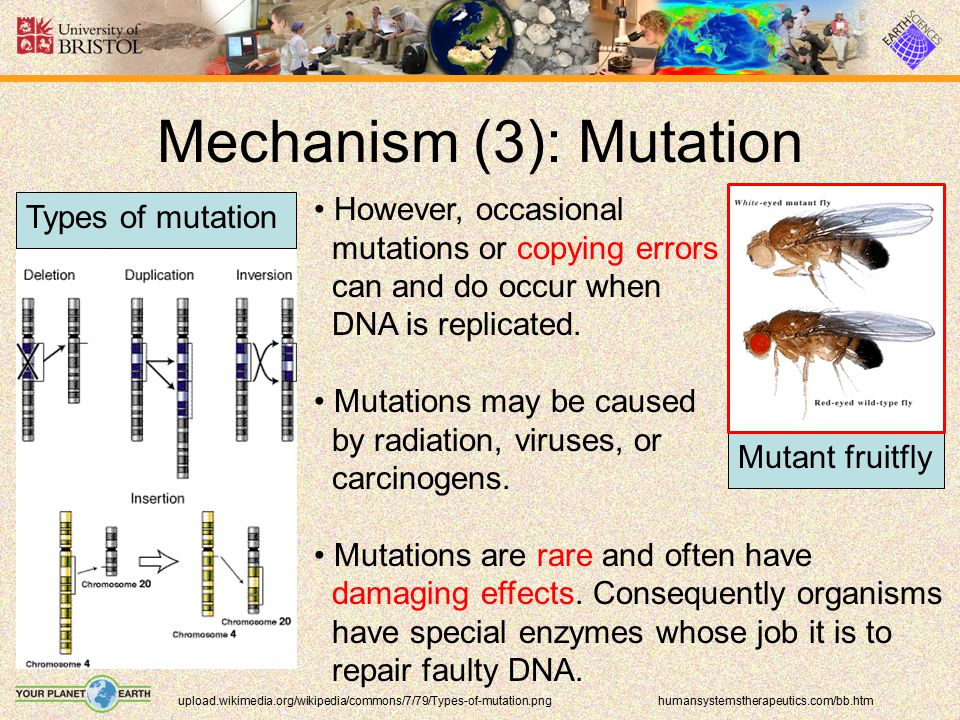 Mechanism (3): Mutation