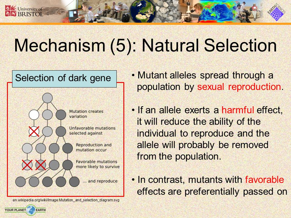 Mechanism (5): Natural Selection