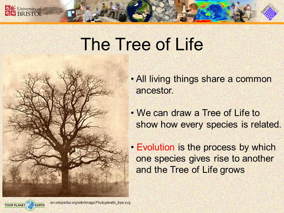 The Tree of Life All living things share a common ancestor.
