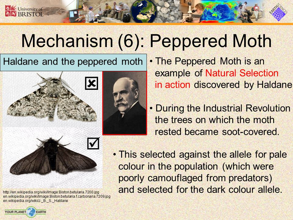 Mechanism (6): Peppered Moth