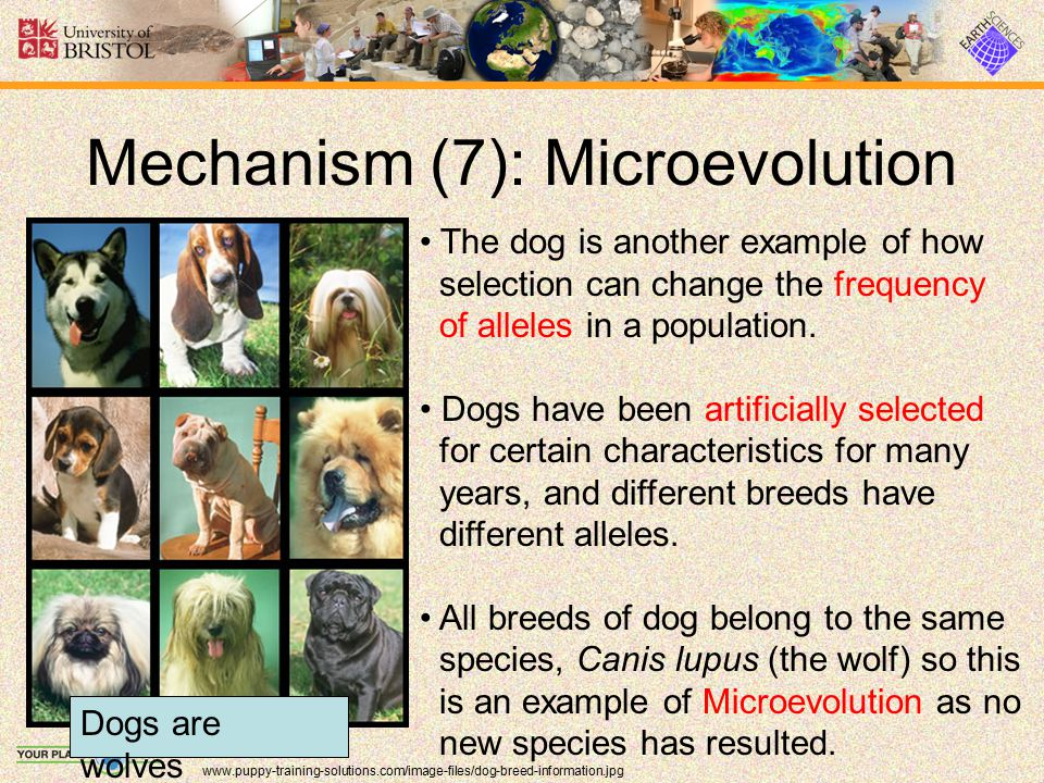 Mechanism (7): Microevolution