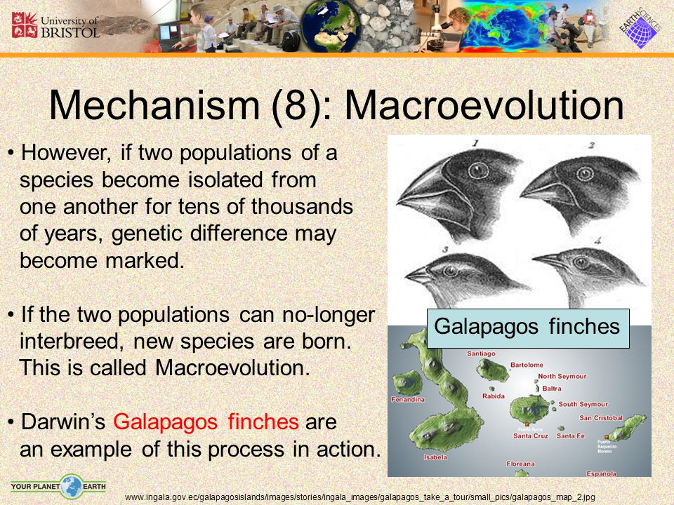 Mechanism (8): Macroevolution