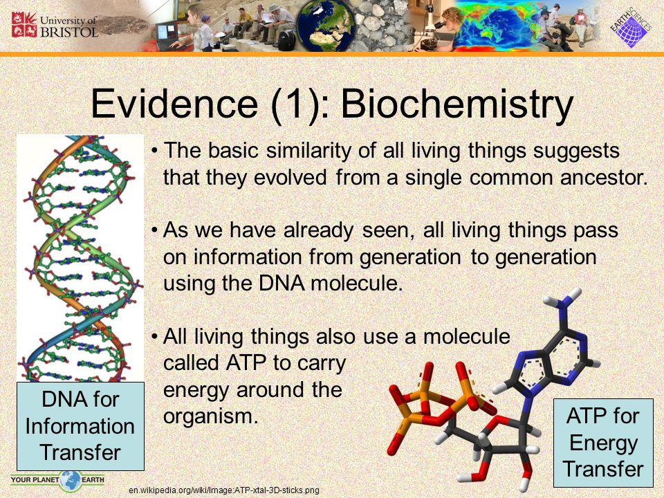 Evidence (1): Biochemistry
