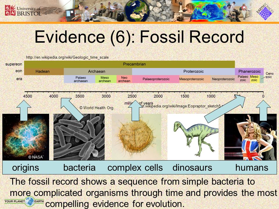 Evidence (6): Fossil Record